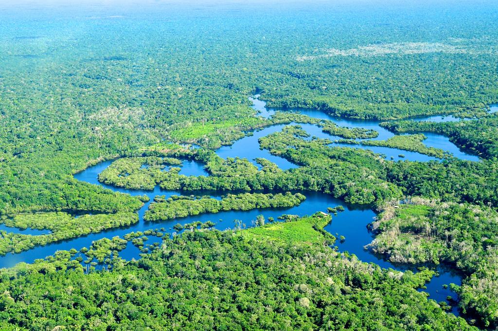 Debate with the brazilian amazon rainforest