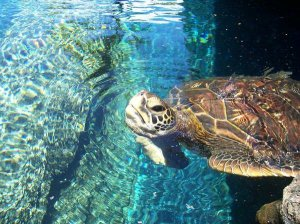 This is exactly the sea turtle that made me fall endlessly in love with these majestic creatures.